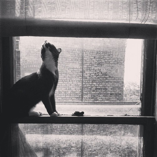 Cat in the window. #scullygram