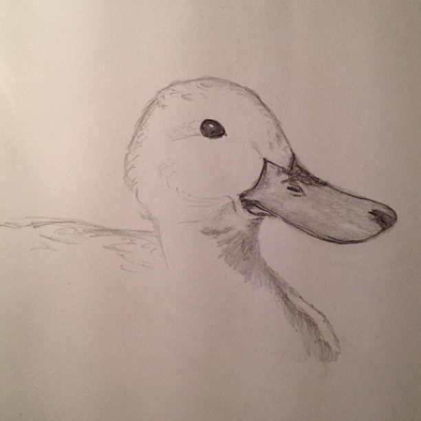 I drew this for no other reason than I LOVE DUCKS. They are second to dogs. What is it with me and 'D' animals?