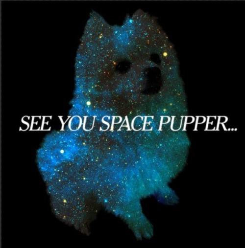 Bark At The Moon Gabe The Dog
