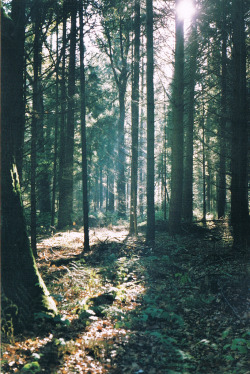 restaurer:  the woods. (by Nyra ❀)