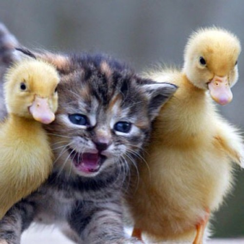 Adorable chick magnet.