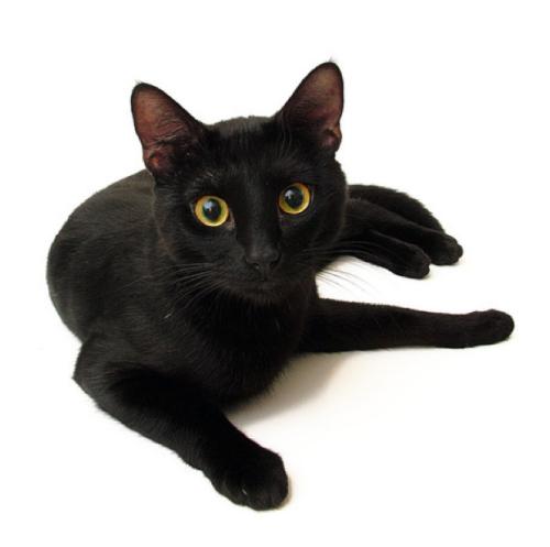 ผลการค้นหารูปภาพสำหรับ melns kaķis