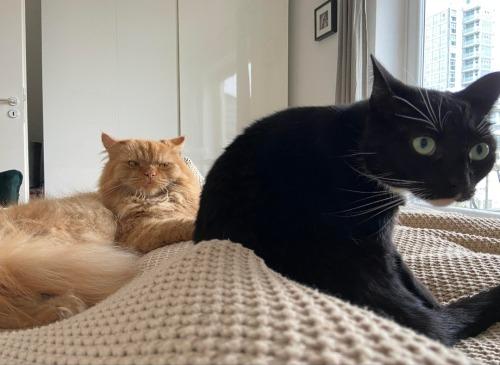 PsBattle: Orange cat #LOL#funny#photoshop#photos