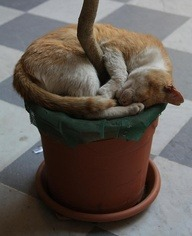 Flowerpot Cat by Rob http://bit.ly/17iwqIA