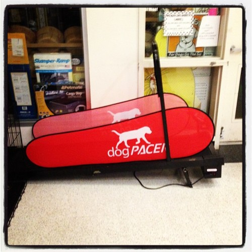 Also I requested they provide a treadmill for dogs. #ukiah #seansrider