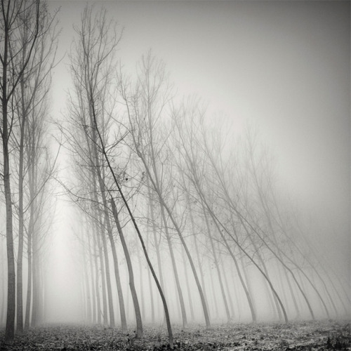 Long Exposure Tree Landscapes by Pierre Pellegrini Christopher Jobson, thisiscolossal.com Swiss photographer Pierre Pellegrini shoots some phenomenal long-exposure photographs of trees. The strong perspective and foggy atmosphere seemingly ever-present in his work creates images that are both beautiful and eerie. You can see hundreds m…