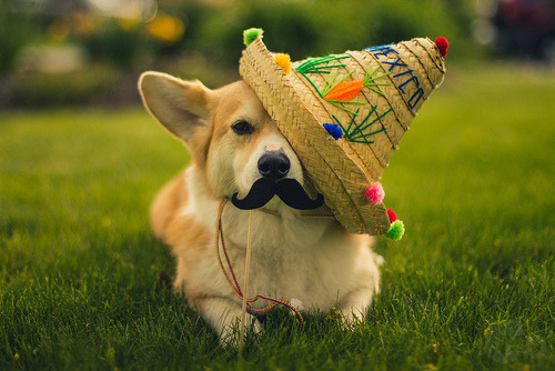 amorevole:  happy cinco de mayo!