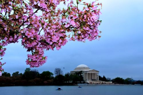 Hanami On the Tidal Basin Fuji s5 pro
