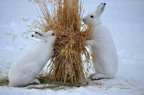 picolaine:  Fancy Rabbits Pakistan