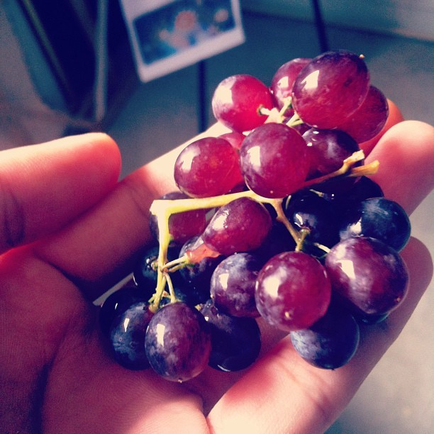 Baby grapes! 😍 #love #grapes #fruit #baby #tiny #cute