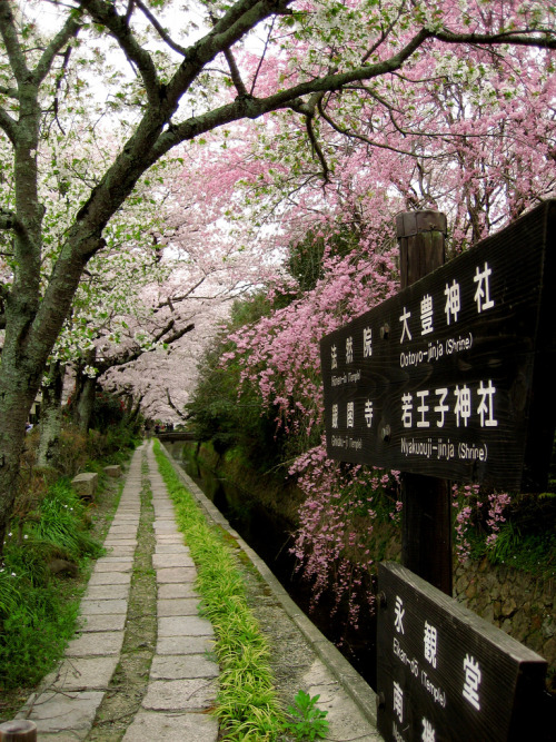 yuki-michi:  Philosopher's Path, Kyoto (by kukumaloo)