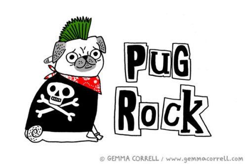 Pug Rock! Also available in T-Shirt form …
