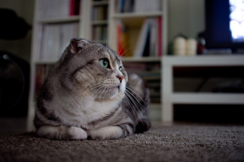 89cats:  untitled by changchihhsiang on Flickr.