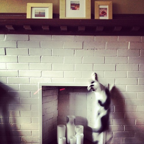 #kitty #climbs the #walls for #mr #laser