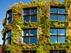 (via Pictures: Green Walls May Cut Pollution in Cities)