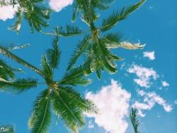 nature hawaii Oahu palmtrees healthyliving shannenrobyn