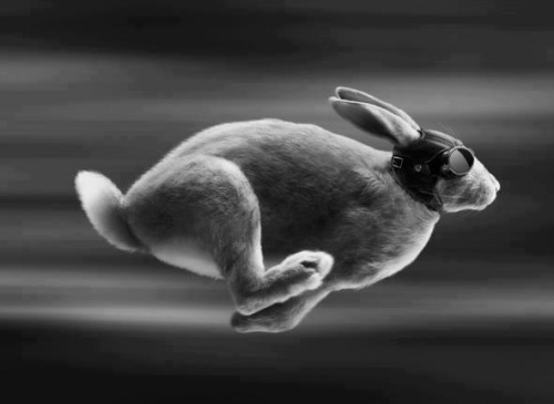 thedreamerlullaby:  Run Rabbit…RUUuuuUuNNnNnNnnnnn!