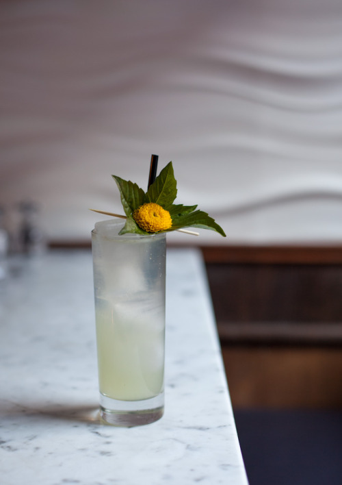 dandelion thai basil fizz. 2oz spring 44 gin.1/4oz suze1/2oz lime juice1/2oz simple syrup3 large thai basil leaves muddle, shake, strain, top with club soda.