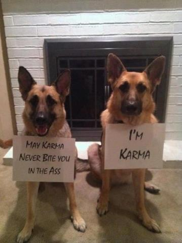 One more for for the love of the German Shepherd! And o - that Karma can be a bitch, for sure!
