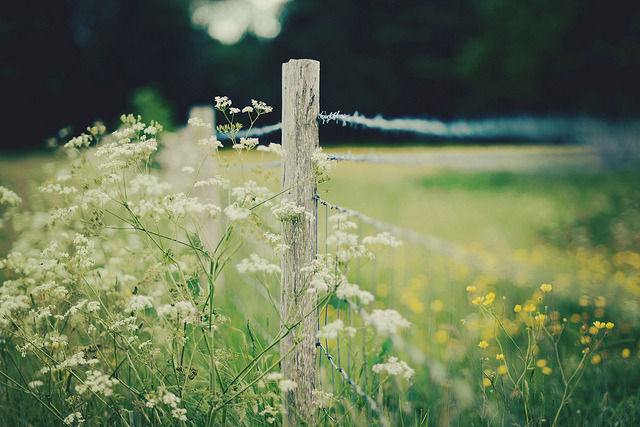 arquerio:  white meets yellow fence by Kirstin Mckee on Flickr.