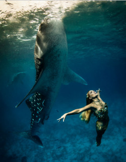 Whale Shark Fashion Photos by Shawn Heinrichs and Kristian Schmidt