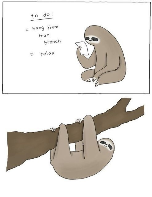 A sloth's life. on We Heart It. http://weheartit.com/entry/54923949