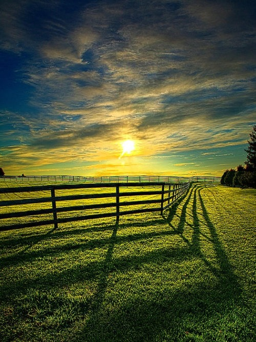 palavre:  Fences by Phil Koch