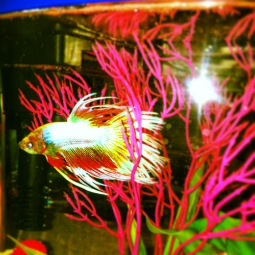 Meet fish !!!:) my new friend :))