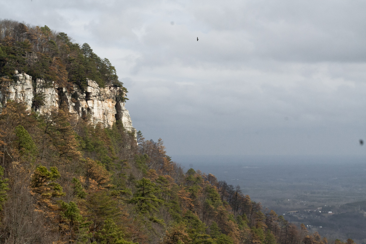 Went on a little hike with friends - Pilot Mountain, North Carolina.