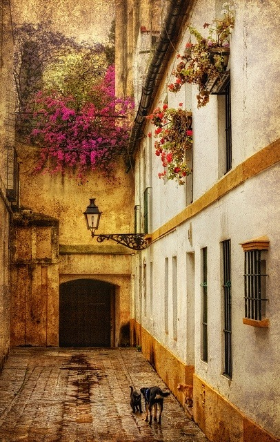 Side Street, Seville, Spain photo via ophelia