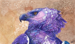 deviantbirds:  paint me purple by *Novawuff Commish for miayan .. she asked for a purple Harpy Eagle <3Watercolor background and Prismacolor Colored Pencil birdie!