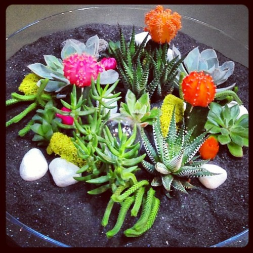 #succulents & #cacti at pigment. such a lovely arrangement!  (at Pigment)