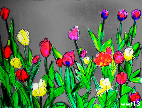 """5_13_13"" (evanston tulips)"" (marker/watercolor pencil/acrylic/photoshop)"