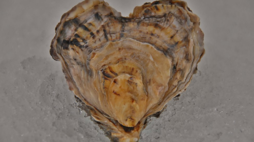 Happy Valentine's Day!  Heart-shaped oyster found in a Glasgow restaurant!