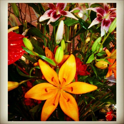 Evrything #bloomed this week! :) #beautiful!!   #asiaticlillies#flowers#floral#floralarrangement#orangeFlowers (at Taiwan Restaurant Willow Glen)