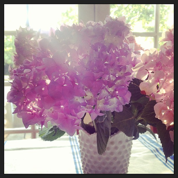 #fresh cuts this #morning #hydrangeas #flowers  #sanjose