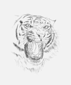 eatsleepdraw:  Sketch about a Tiger.