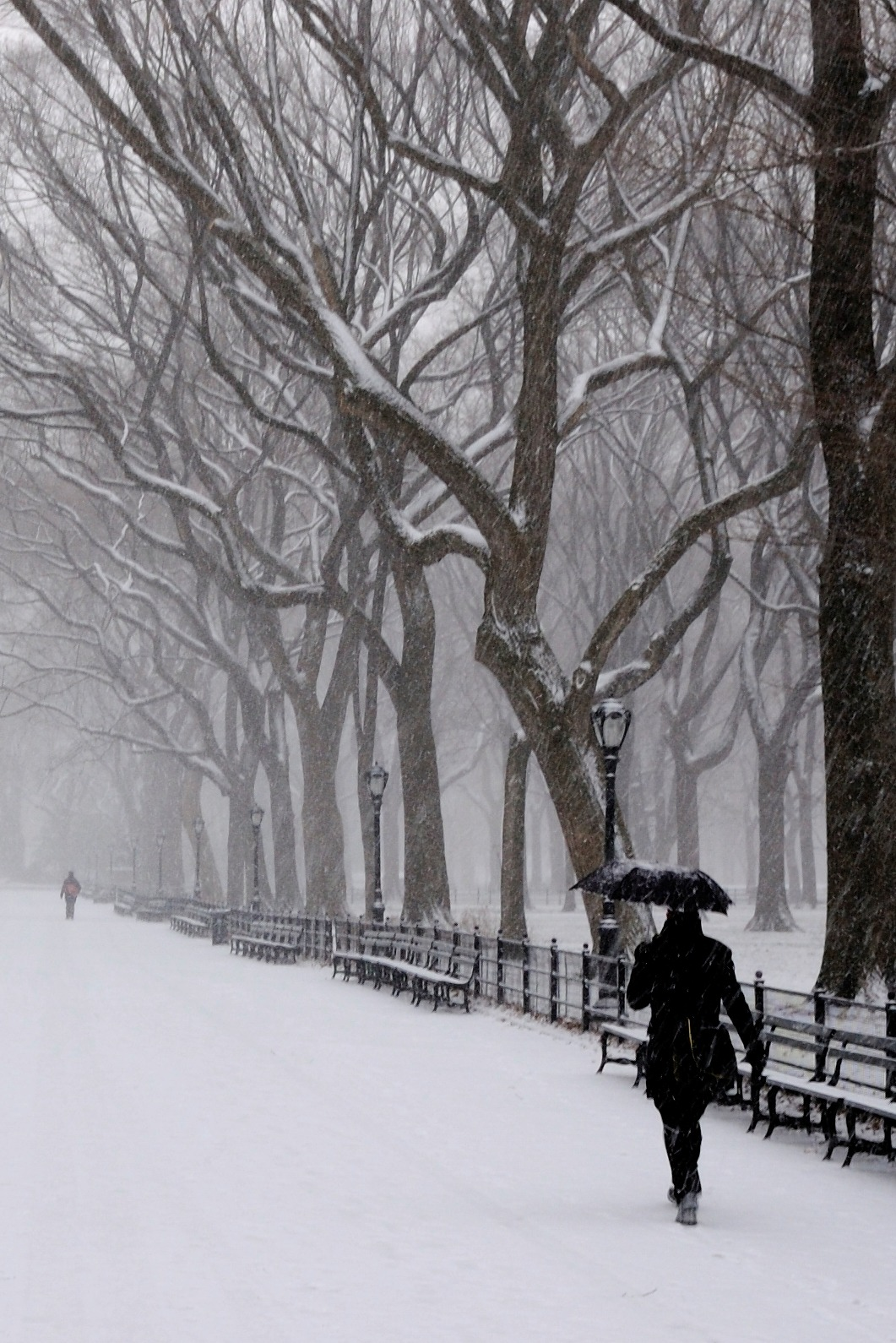 0rient-express:  central park | by Ralph Hockens.