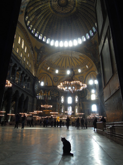 hagiasophiacat:  Hagia Sophia with Cat (by Mat Booth)  Follow this Blog - it's about the most famous cat in all of Istanbul!