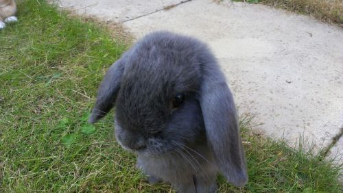 There we go my tumblr has a picture on it… The bunny is mine called Wispa