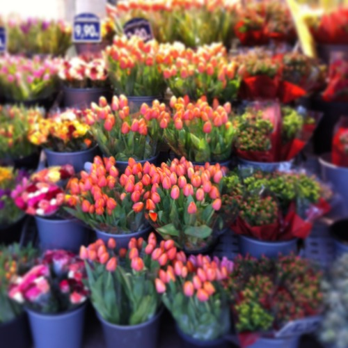 Tulips are so beautiful in Paris right now!