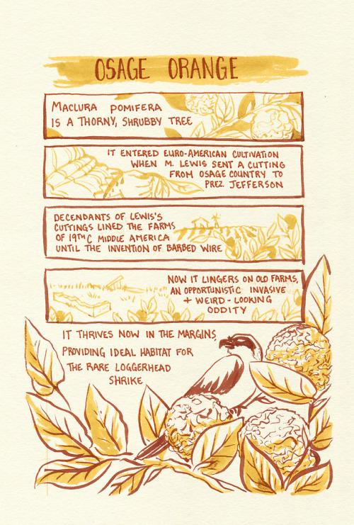 prairie restoration botany plants history environmental history ecology