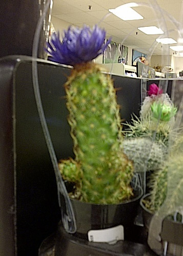 BREAKING NEWS: Susie is actually a cactus.