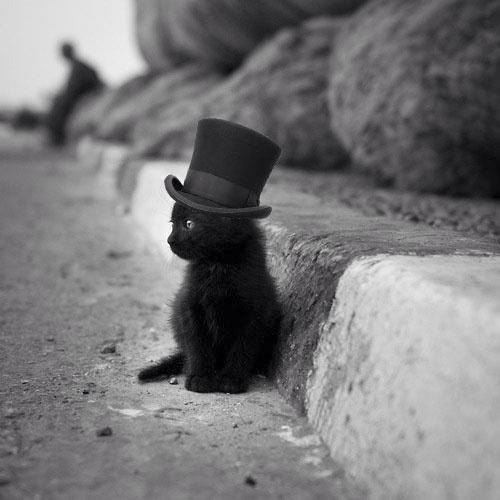 girlwiththeskullkneesocks:  If that isn't the cutest damn cat in a hat!
