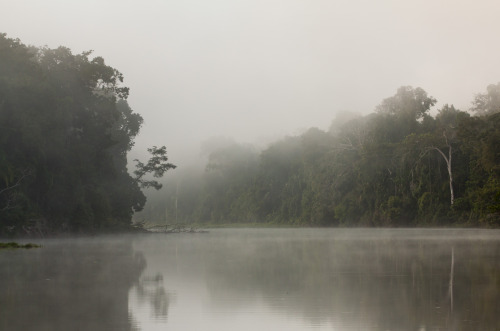 Morning mists drapes the oxbow lake, Lago Soledad, in the Peruvian Amazon. This is one of the final tracts of pristine rainforest in the Upper Amazon and harbors some of the highest concentrations of biodiversity on the planet. Conservation efforts to protect this land, currently at risk from deforestation, are being spearheaded by the NGO Fauna Forever and the ARCC (Amazon Research and Conservation Center, a world class lodge and research facility) Project. Visit ARCC to support the cause (http://www.facebook.com/AmazonCenter?fref=ts). (Photo by Matt Champoux)