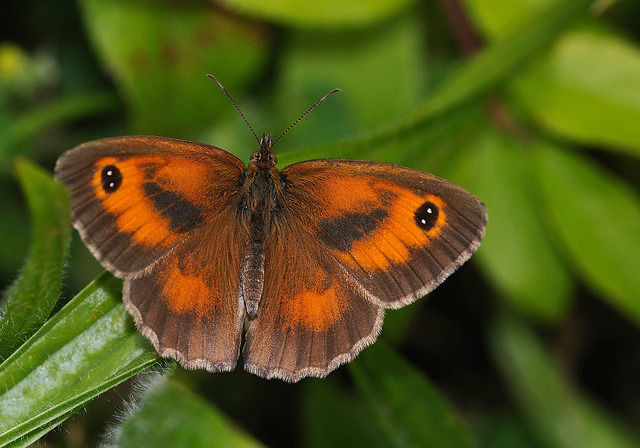 Gatekeeper on Flickr.