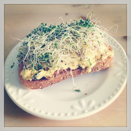 "My new favorite food —Sprouts! Sprouts are delicious on salads and sandwiches, in wraps, or to garnish pasta and soup dishes. Here, I have a slice of whole grain toast with ""Better than Chicken"" salad and alfalfa sprouts for lunch."