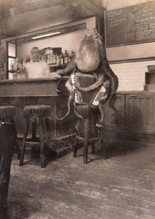 zengiraffe:  circusofsplendor:  steampunktendencies:  Octopus Playing Accordion - Simon Warmer   .  of course  Here I am at my gig last Saturday night. I brought the house down with my second encore. #musician #sexyoctopus