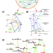 CluePedia Cytoscape plugin: pathway insights using integrated experimental and in silico data. Bindea et al, Bioinformatics. 2013 Jan 16.   Cytoscape cited!