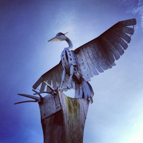 Bird (at Northenden Riverside Park)
